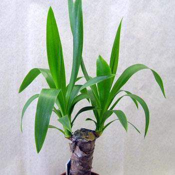 Фото №12 - Комнатные растения для ленивых