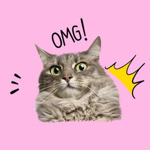 Фото №9 - Тест: Выбери мартовского котика и узнай, сколько человек безответно в тебя влюблены