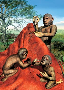 Фото №2 - Родословная «южных обезьян»