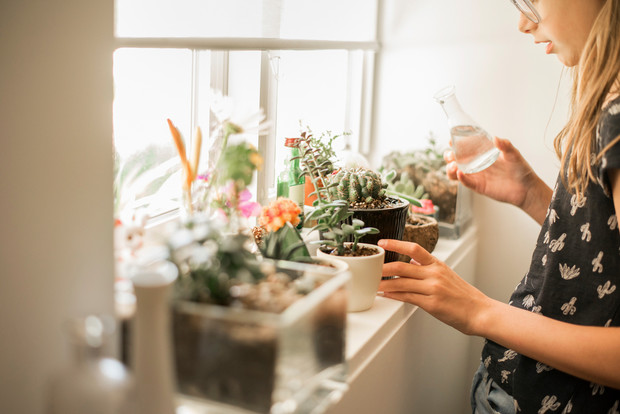 Ядовитые комнатные растения фото и названия