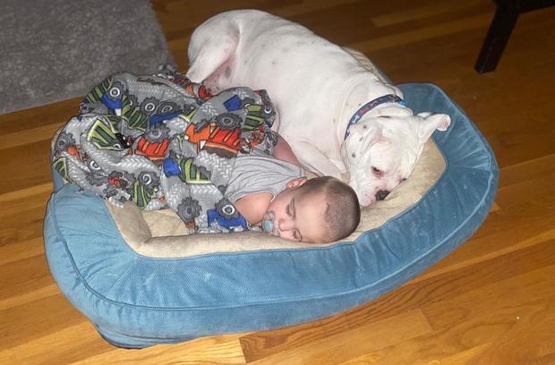 Фото №9 - Что будет, если оставить собаку в детской на ночь: видео
