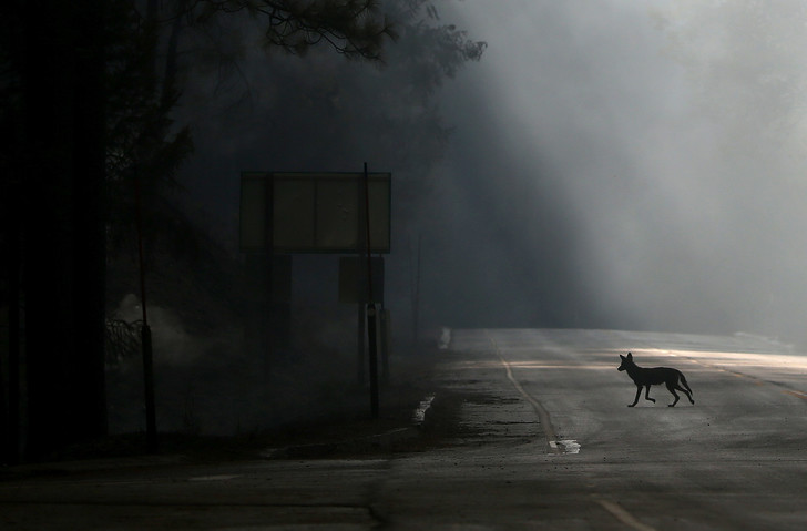 Фото №1 - Почему животные переходят на ночной образ жизни