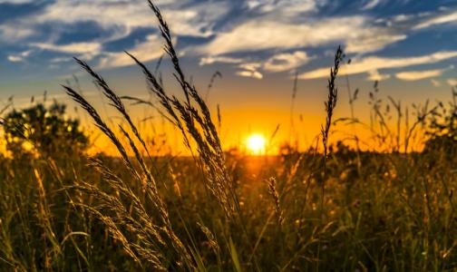 Фото №1 - 8 проблем со здоровьем, которые финны предлагают лечить травами