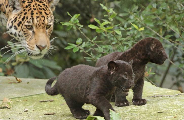 Фото №1 - Как животные определяют человеческое присутствие