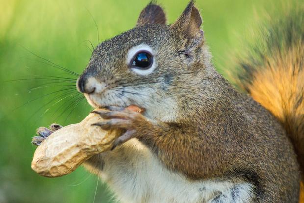 арахис, калорийность, польза