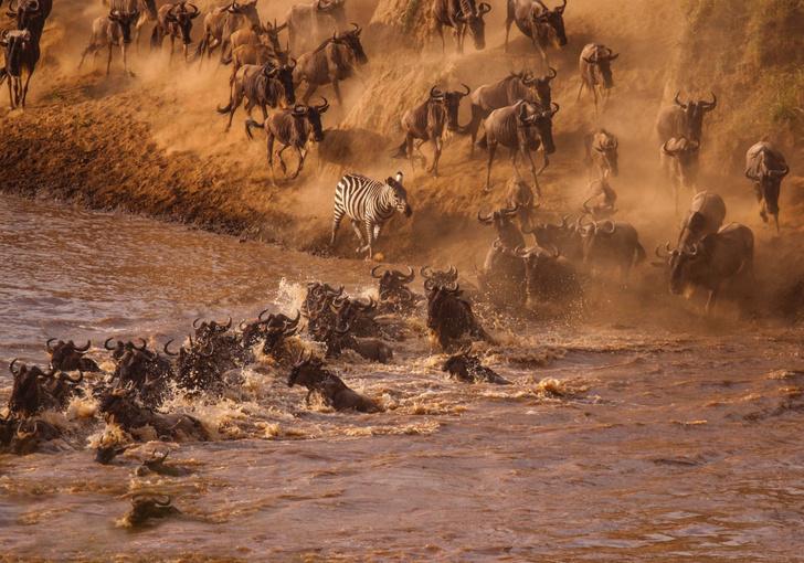 Фото №1 - Одинокая зебра