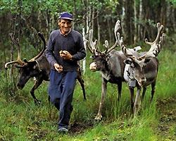 Фото №4 - Особенности национального характера, или За что скандинавы любят мороженое