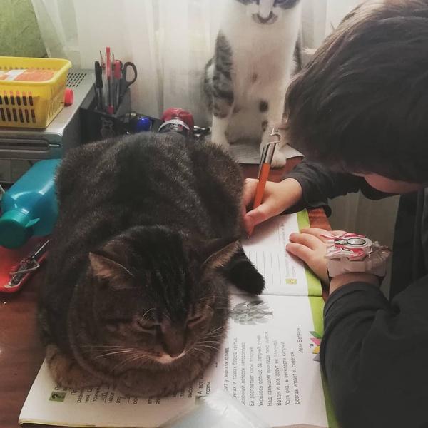 Фото №2 - Как котики помогают детям делать уроки: 25 смешных фото