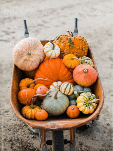 Фото №7 - Тест: Выбери тыкву, и мы опишем твою осень тремя эмодзи