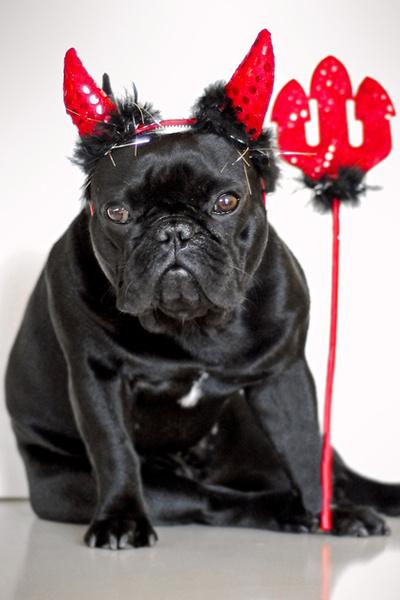 Фото №7 - Фотоподборка недели: собаки, которые уже готовы к Хэллоуину
