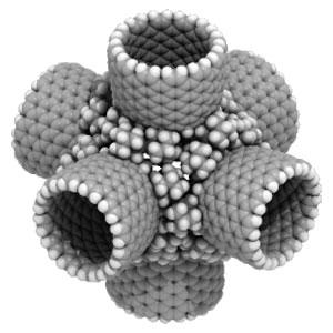 Фото №1 - Нанотрубки засоряют легкие