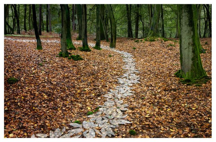 """Фото №4 - ВОКРУГ СВЕТА - партнёр выставки """"Лесные истории. Осень"""""""