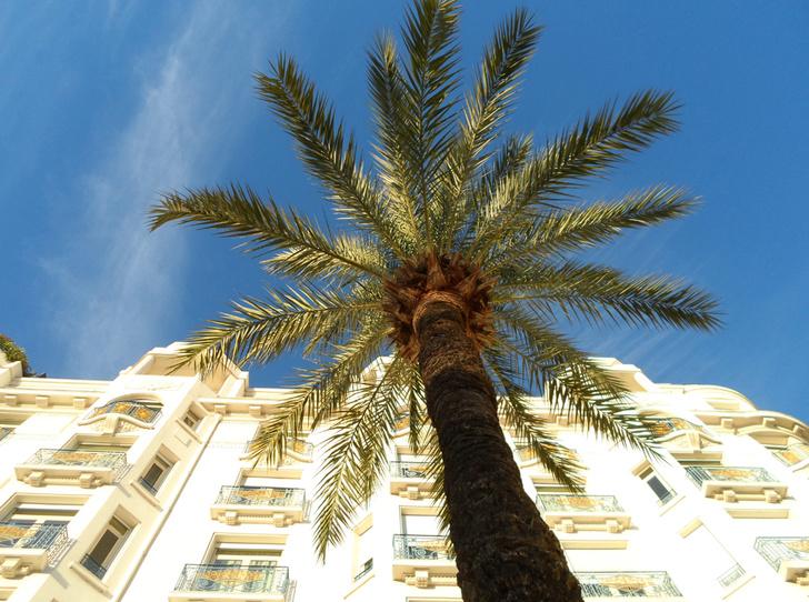 Фото №8 - Каннская жемчужина: отель Martinez вновь принимает гостей
