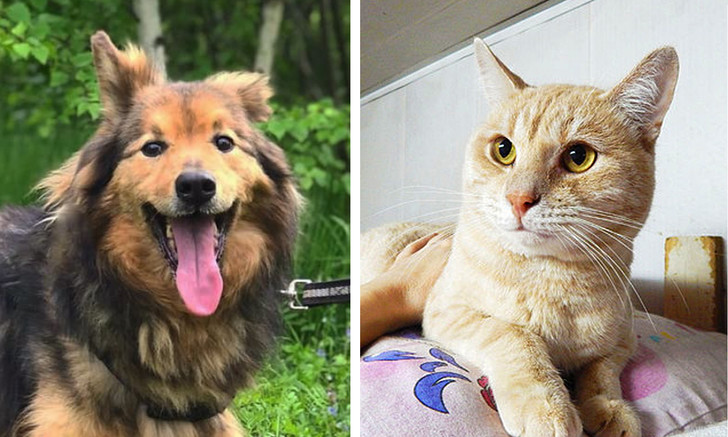 Фото №1 - Котопёс недели: пёс Артемон и кот Лучано