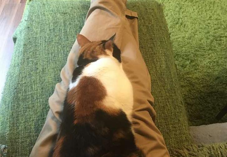 Фото №1 - Неожиданный лайфхак для владельцев слишком назойливых кошек