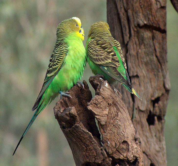 Фото №1 - В Сибири найдены останки древнего попугая