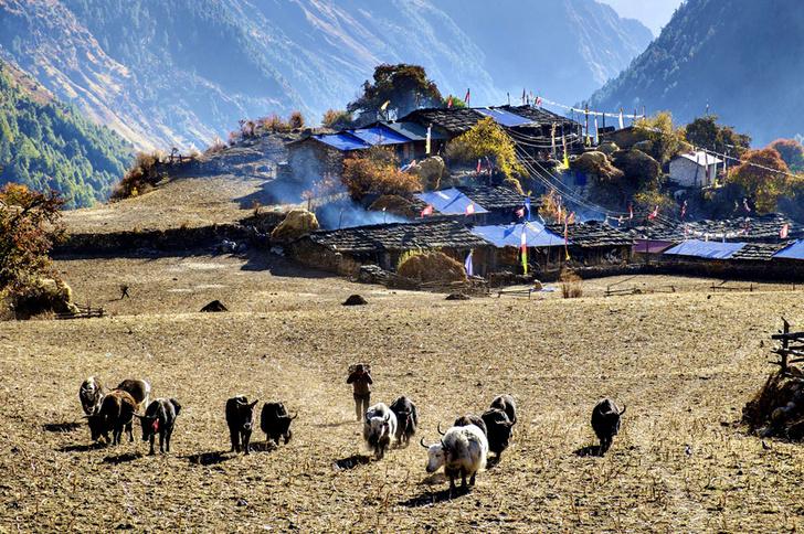 Фото №8 - Гора на плечах: кто несет вещи покорителей Эвереста