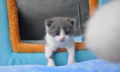 Фото №1 - В Китае начали клонировать кошек