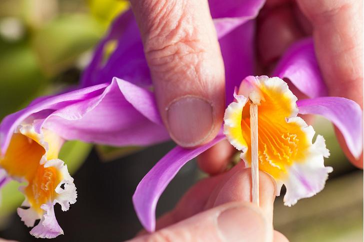 Фото №4 - Ботаника: прекрасные мошенницы