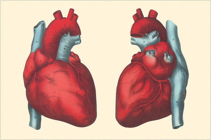 Фото №1 - Проблемы с потенцией оказались связаны с сердечно-сосудистыми заболеваниями