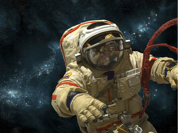 Фото №1 - «Роскосмос» объявил онаборекосмонавтов