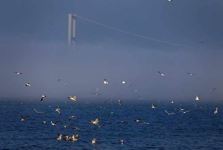 Фото №1 - В тумане