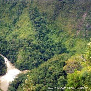 Фото №1 - Мексиканские леса вымирают вместе с планетой