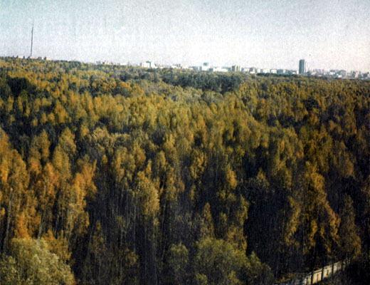 Фото №1 - Удовольствие владеть лесом