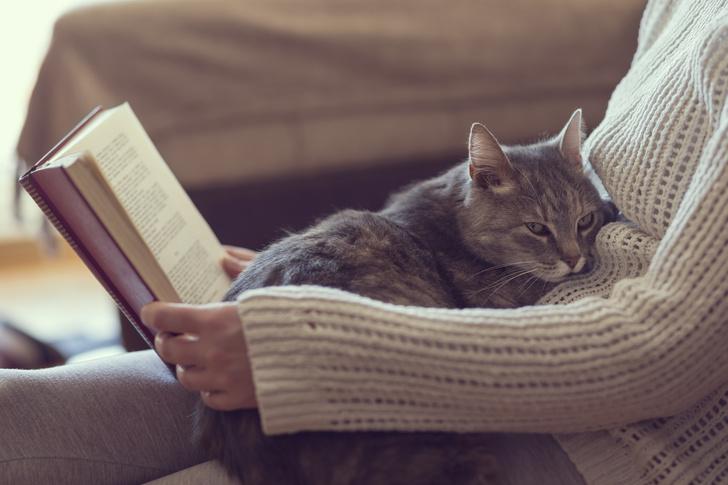 Фото №5 - 10 причин, почему у вас дома должен жить кот