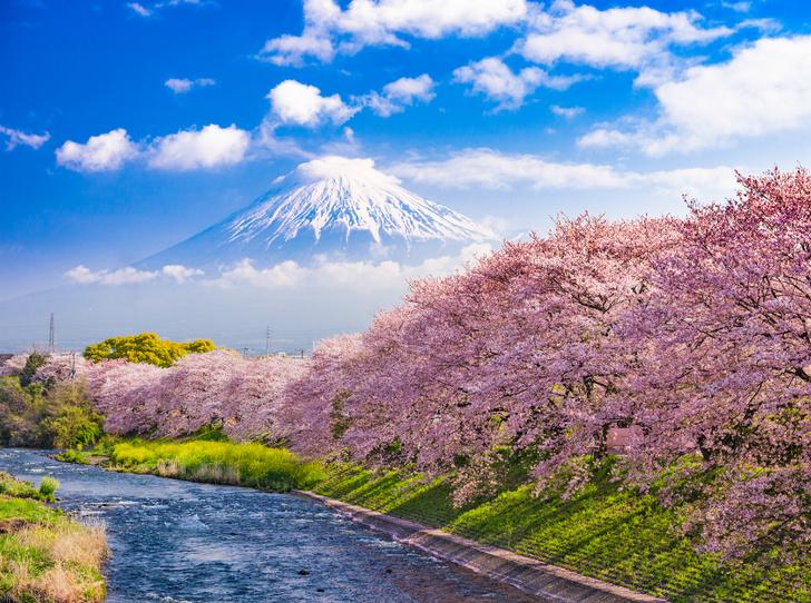 Фото №9 - Как сэкономить на путешествии в Японию
