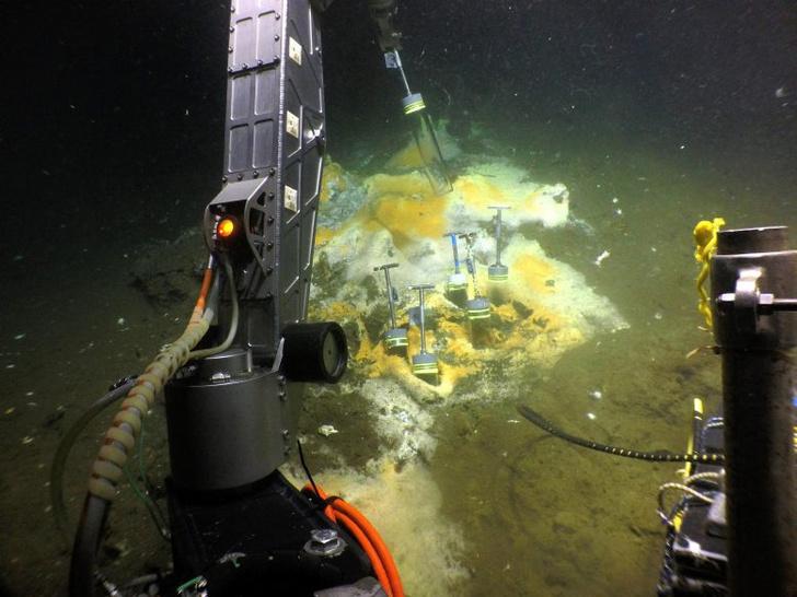 Фото №1 - Ученые нашли питающихся этаном микробов