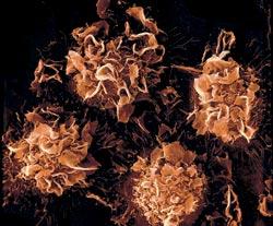 Фото №4 - Оккупация на клеточном уровне