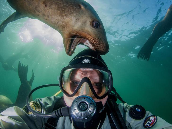 Фото №1 - Селфи с морским львом