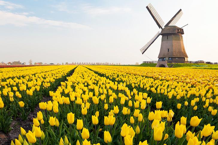 Фото №3 - Личный опыт: «Я пробовала встречаться с голландецм, и это была самая плохая идея в моей жизни»
