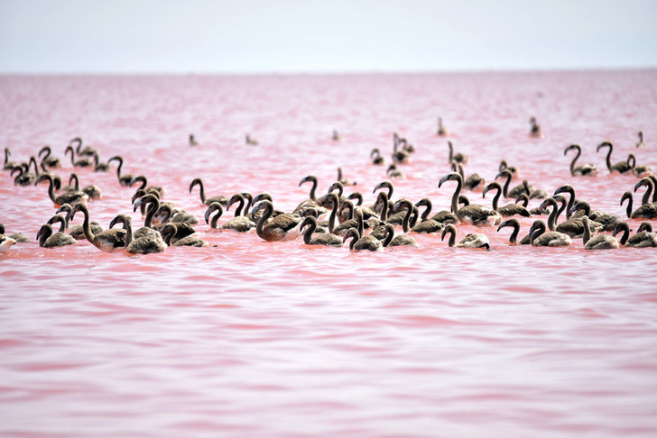 Фото №1 - Розовое озеро