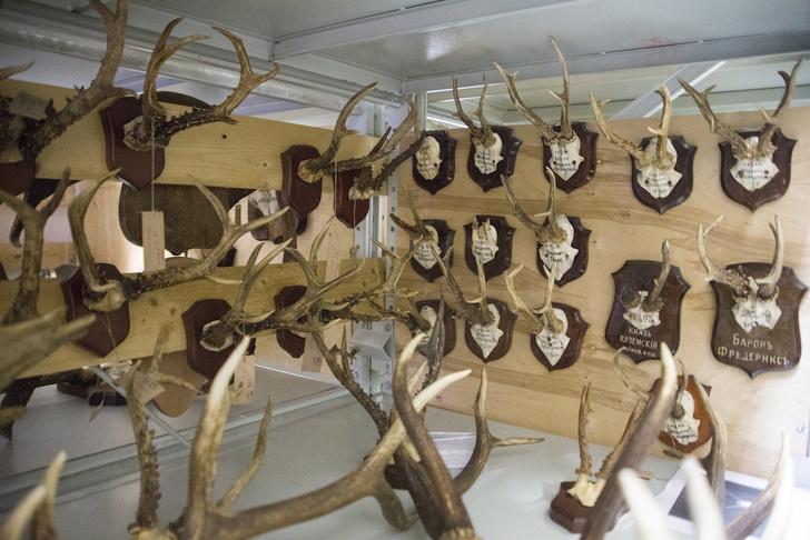 Фото №1 - Царские трофеи: как охотились русские цари и почему их трофеи оказалась в запасниках Дарвиновского музея