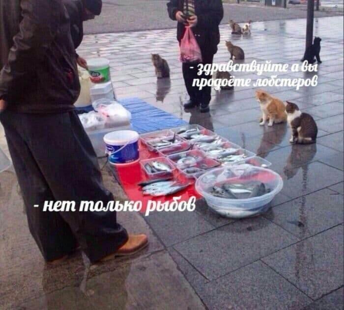 Фото №2 - Самые смешные образцы нового мема «Вы продоёте рыбов» и история его появления