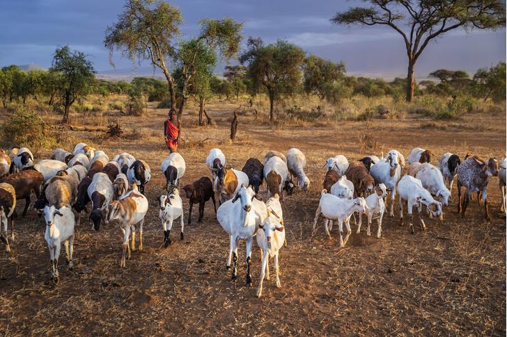 Фото №12 - Уроки на экваторе: месяц в деревне в Кении глазами волонтера из России