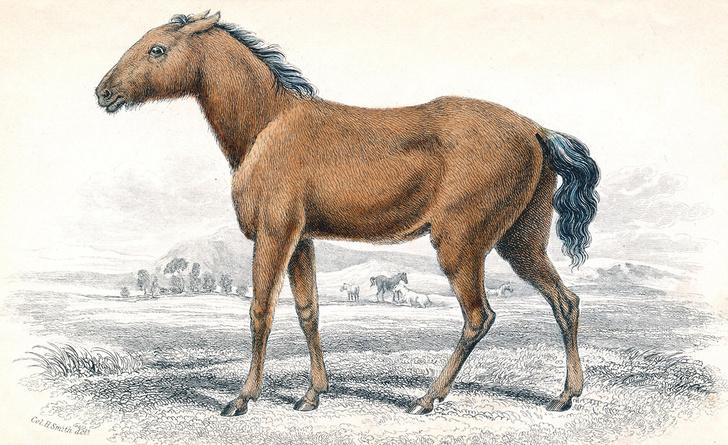 Фото №1 - Кузены по воле: дикие родственники лошади Пржевальского
