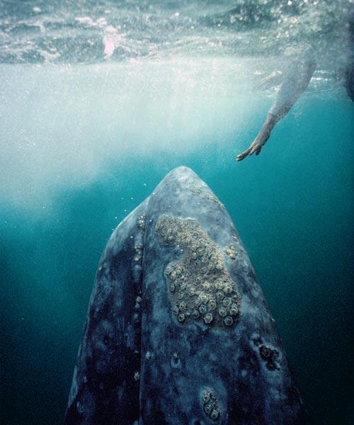 Фото №1 - В гости к морским гигантам