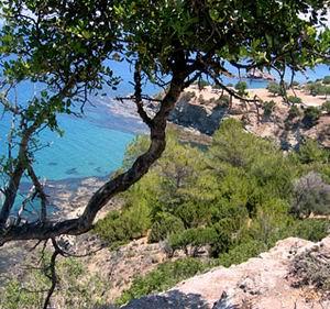 Фото №1 - На Кипре не хватает воды