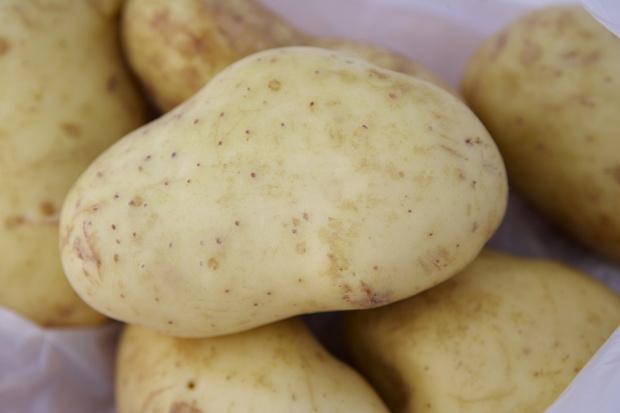 Сорта картофеля, устойчивые к фитофторозу, дают стабильный урожай
