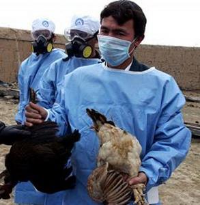 Фото №1 - Создана вакцина от птичьего гриппа