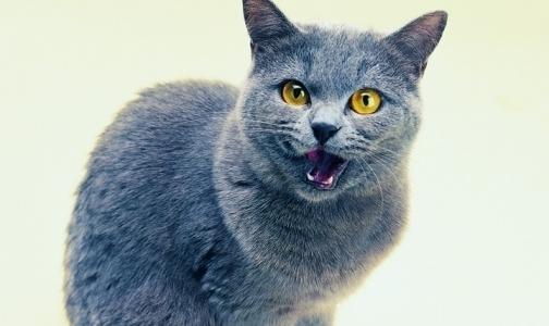 Фото №1 - За вызов скорой помощи котёнку россиянин заплатит штраф в 1000 рублей