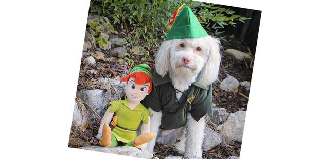 Фото №10 - 20 очаровательных собак в костюмчиках по мотивам мультфильмов Disney