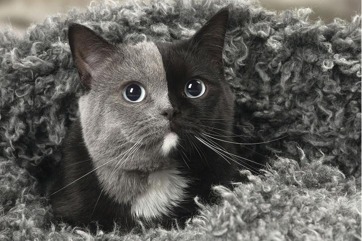 Фото №1 - Полоса черная, полоса серая