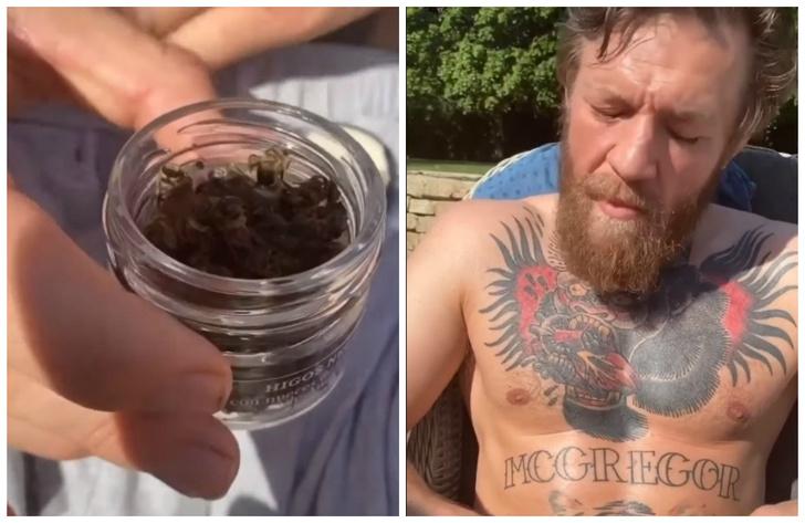 Фото №1 - Конор Макгрегор выложил видео, как ест пчел