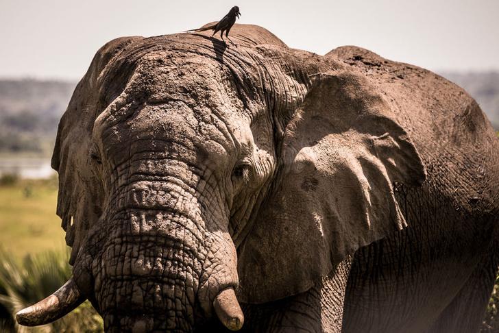 Фото №1 - Жизнь Африки