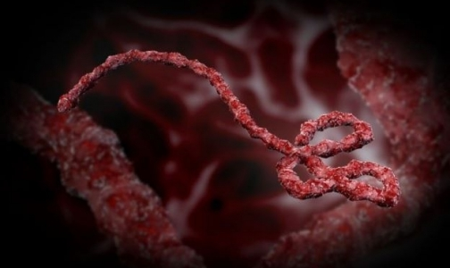 Фото №1 - ВОЗ: секс может помешать борьбе с лихорадкой Эбола
