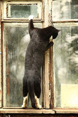 Фото №6 - Как кошки захватили мир